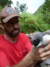 Dr. Andre Raine with a Newell's Shearwater chick