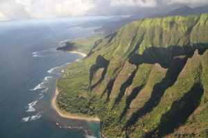 Hawaii's endangered seabirds are bound to both the sea and the mountains (photo by Andre F. Raine)