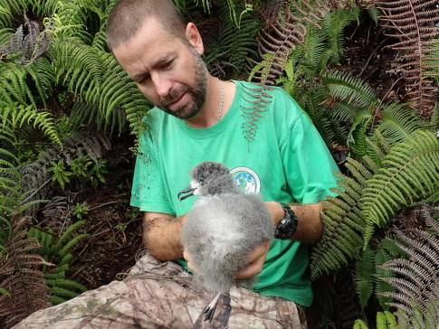 Dr. Andre Raine holding a Hawaiian Petrel chick