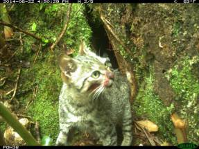 Cat's bloodied face after killing endangered seabirds