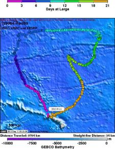 Satellite tagged Hawaiian Petrel 'Red99', now only 34km away from home...... surely its chick is looking forward to its parents' return, 21 days and 9,794km later!